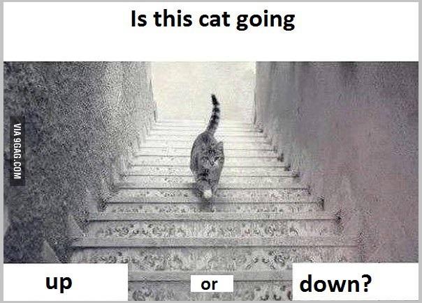 upordowncat2