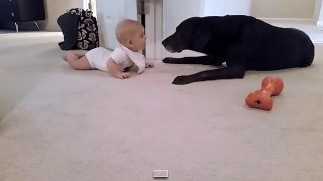 baby_kiss_dog3