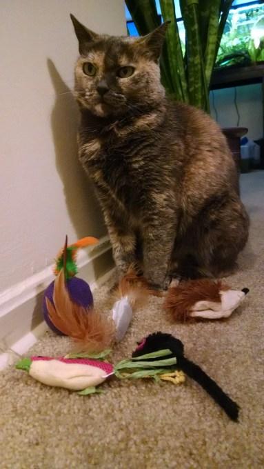 catlife (19)