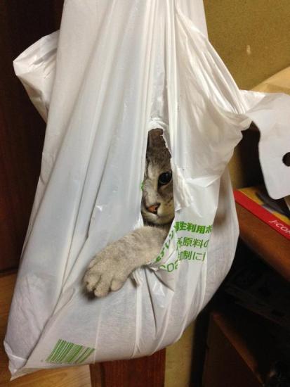 cat_escape7