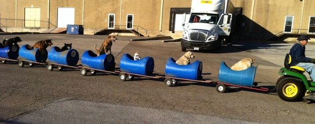 street_dog_train4