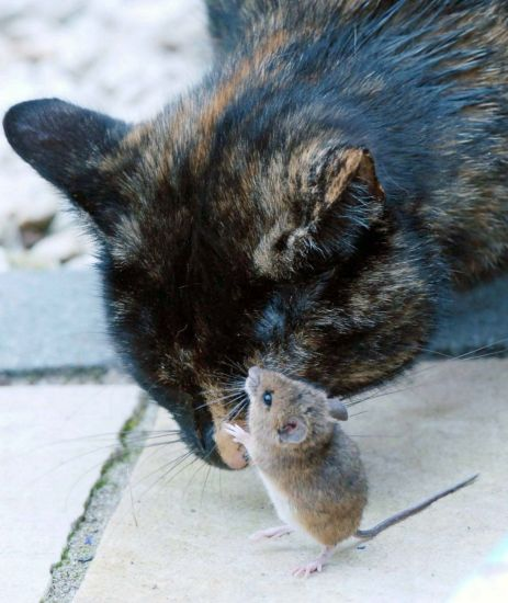 1005catmouse6