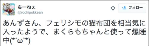 1019nekofukuro5