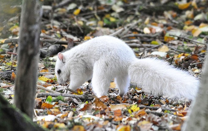 1027white_squirrel2