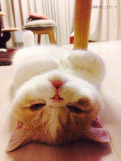 cat_yukadanbou2