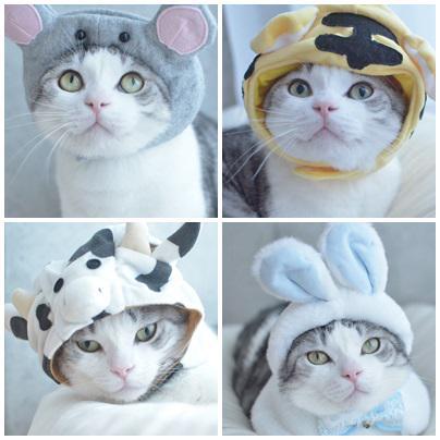 catlife (9)