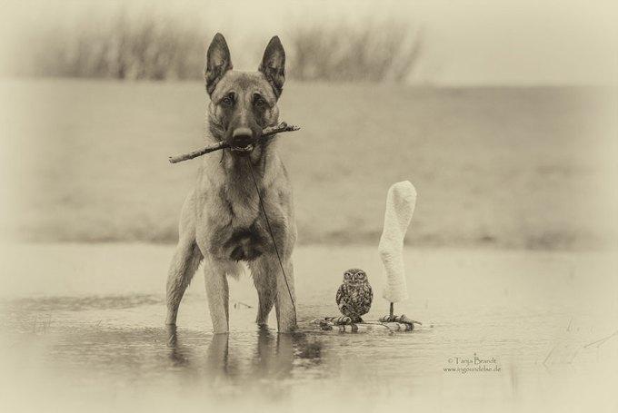1108dog_owl1