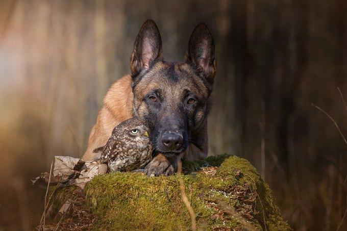 1108dog_owl2