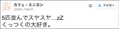 1111rabbit_circle7
