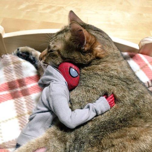 1124cat_spiderman15