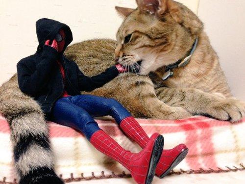 1124cat_spiderman7