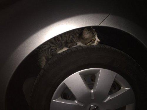 cat_car2