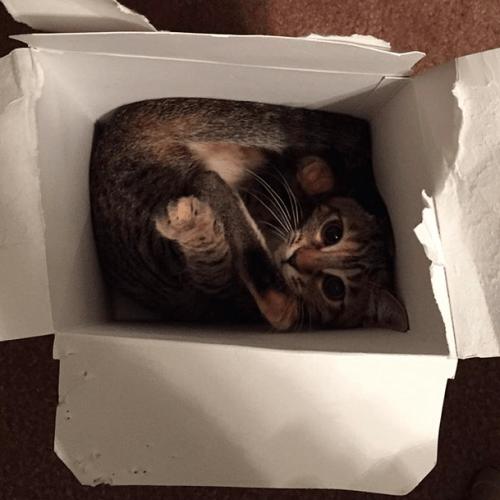 cat_liquid2