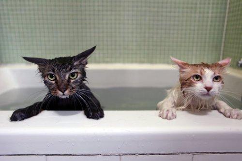 bathcats (4)