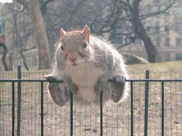 0113fat_squirrel2