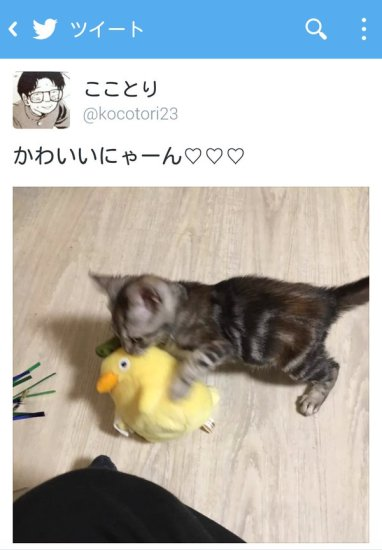 newlife_cat (3)