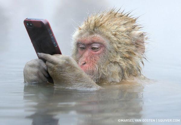sankei_monkey (1)