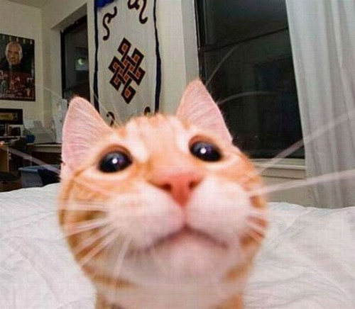 selfiecat (8)