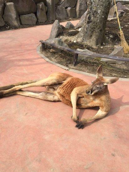 kangaroo_stove (3)