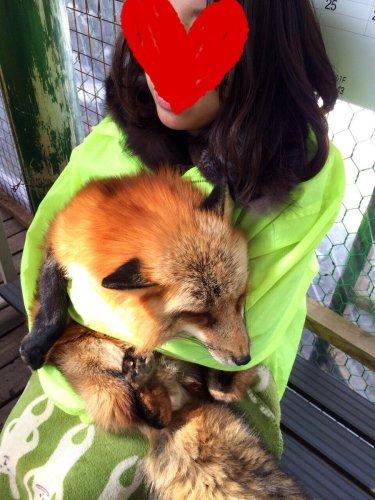 kitsunemura_panda (1)