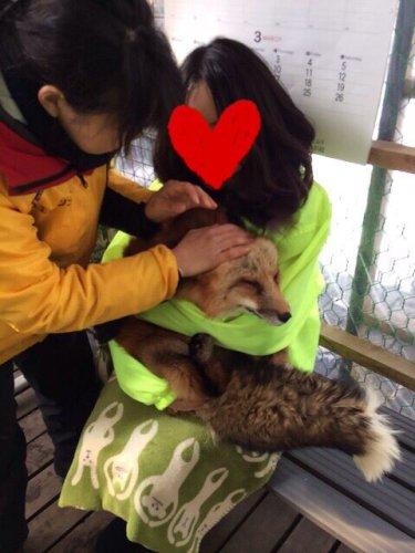 kitsunemura_panda (12)