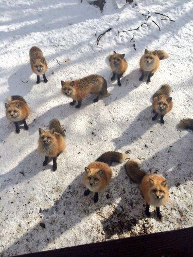 kitsunemura_panda (3)