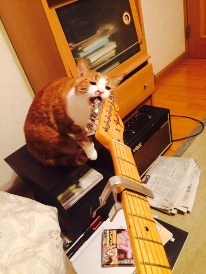 lovelycat (23)