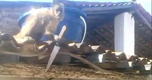 monkey_knife1