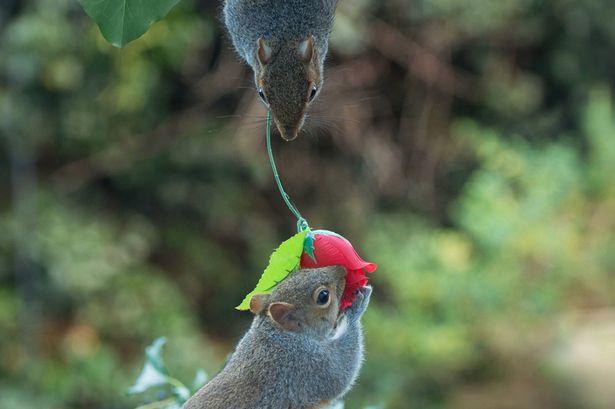 rose_squirrel (1)