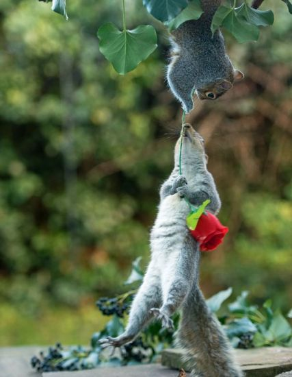rose_squirrel (4)