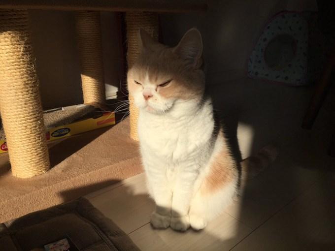 notangrycat (8)