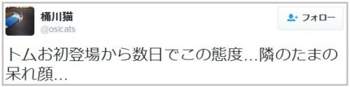 okegawa_cats_01