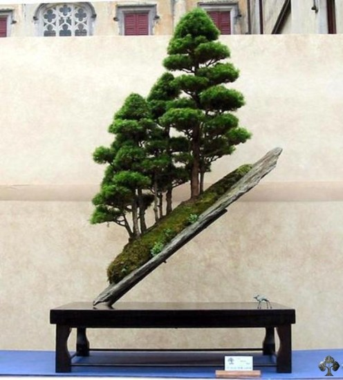 bonsai_unique (1)