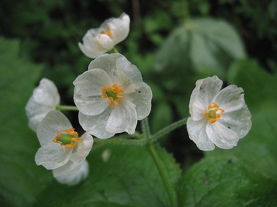 skelton_flower10