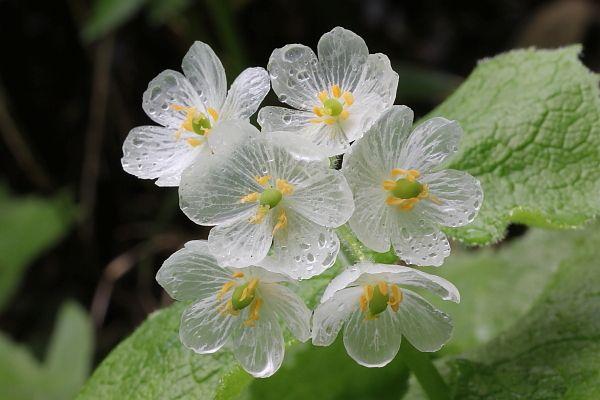 skelton_flower11