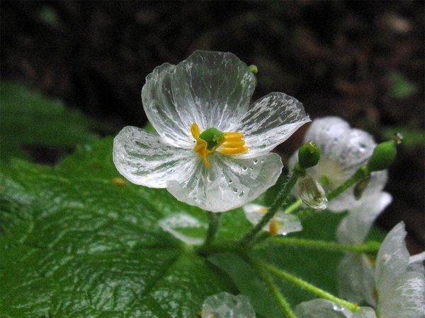skelton_flower2