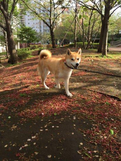 tareodog (5)