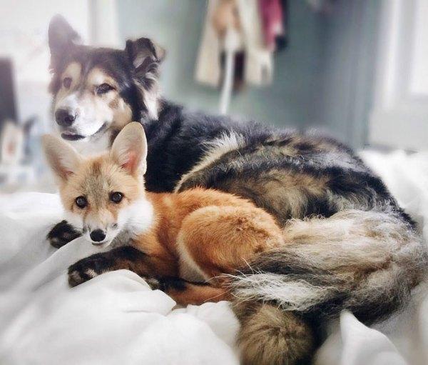 fox_bestfriend10