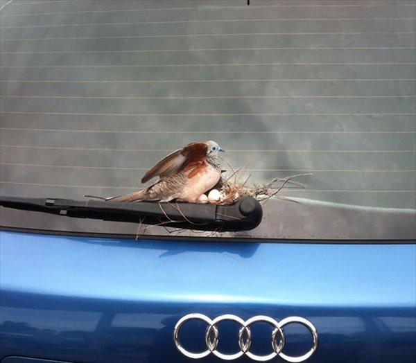 frogbird (12)