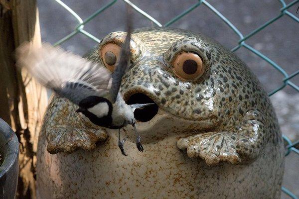 frogbird (7)