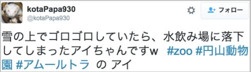mizunoiba_tora20
