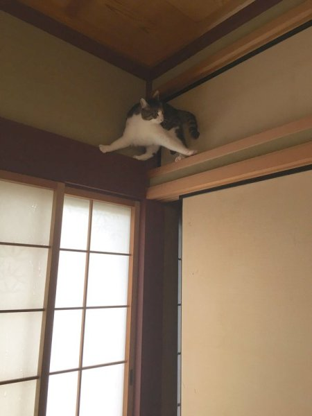 neko_ninja2
