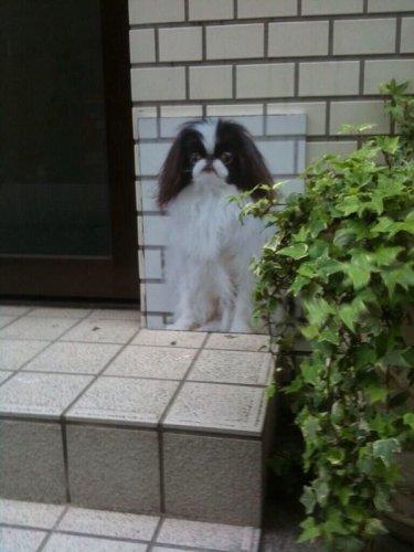 surprisingcat (2)