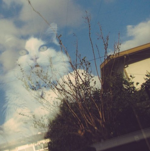 surprisingcat (7)