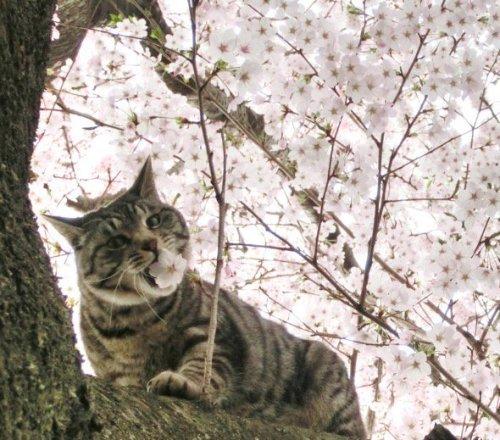 surprisingcat (8)