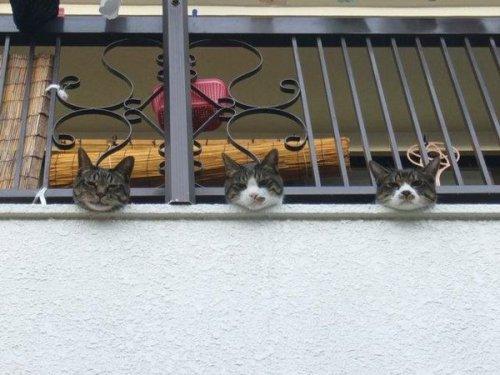 surprisingcat (9)