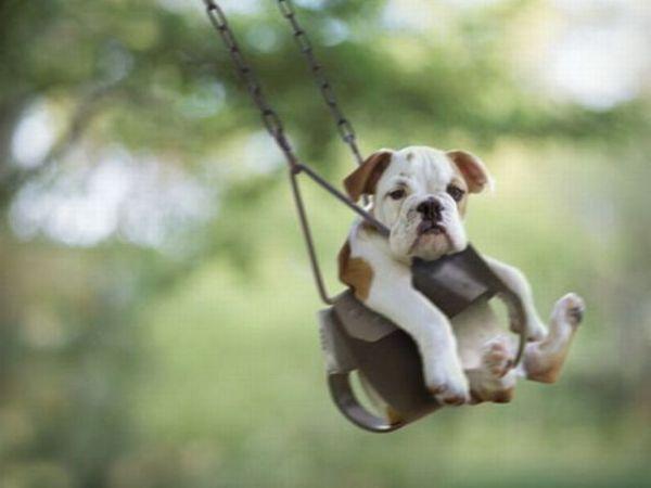 dog_swing11