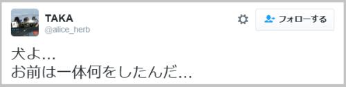 neko_ziken (6)