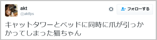 cat_nail (9)