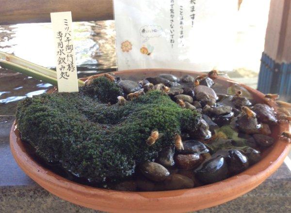 mitsubachi_water (4)